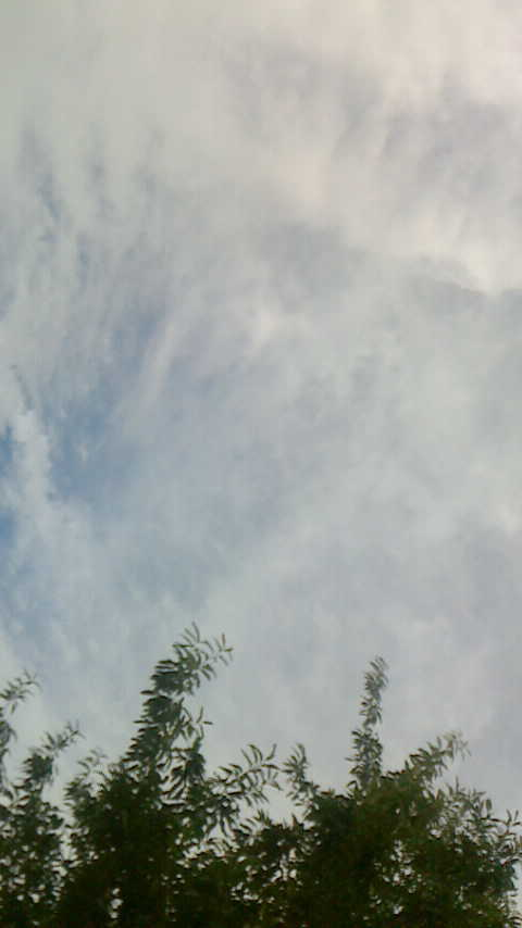 台風に彼岸花